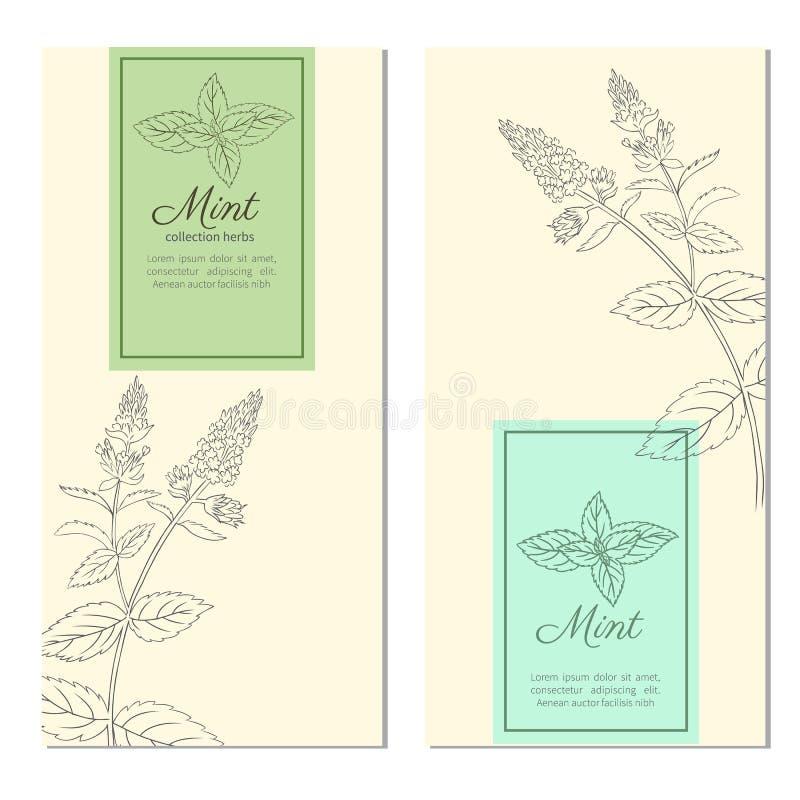 Uppsättningen av vertikala tappningbaner, etiketter med skissar mintkaramellsidor, den planlagda vektorramen med blomningpepparmi royaltyfri illustrationer