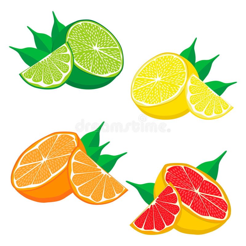Download Uppsättningen Bär Frukt Orange Grapefruktcitronlimefrukt Vektor Illustrationer - Illustration av sunt, symbol: 78725010