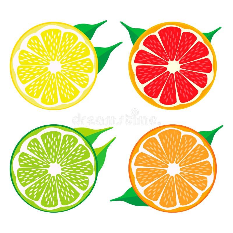 Download Uppsättningen Bär Frukt Orange Grapefruktcitronlimefrukt Vektor Illustrationer - Illustration av leaves, äta: 78725105