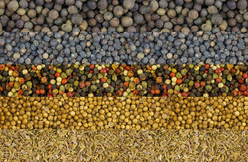 Uppsättningkryddablandar horisontalraden av torra frödillkoriander vit för pepparrosa färggräsplan och doftande och svartpeppar,  fotografering för bildbyråer