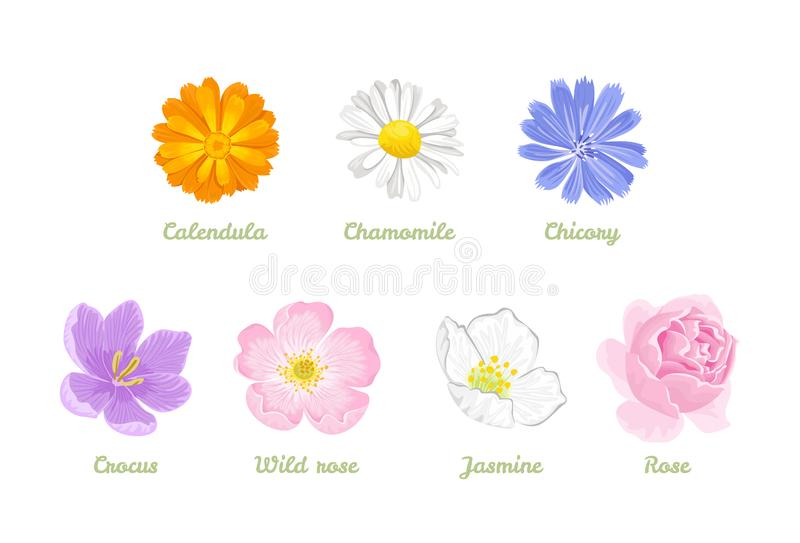 Upps?ttning av blommor som isoleras p? vit bakgrund Vektorillustration av kamomillen, calendula, cikoria, jasmin, ros, krokus, lö royaltyfri illustrationer