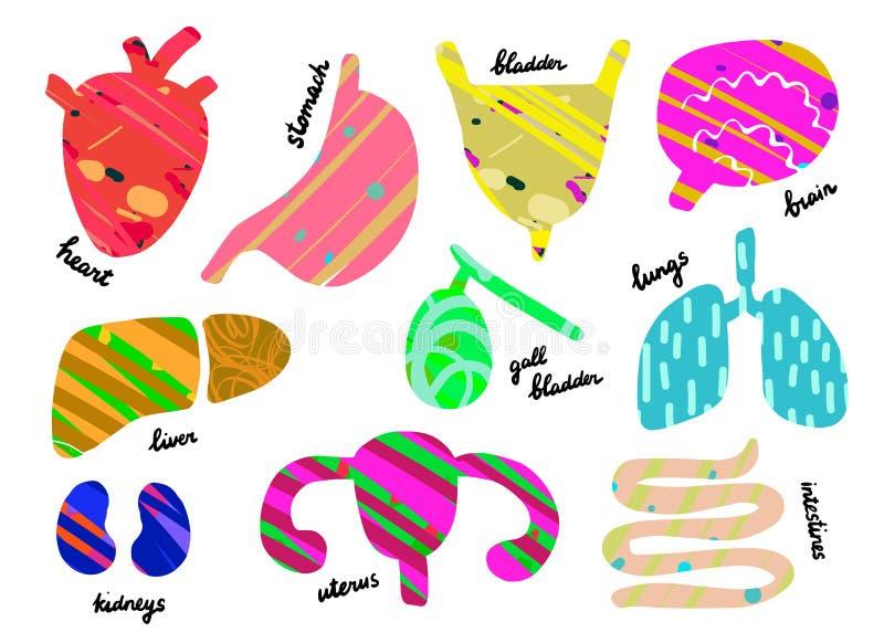 Upps?ttning av m?nskliga organ Anantomy Hjärta lever, lungor, gallblåsa, livmoder, inälvor, mage, njure, hjärna stock illustrationer