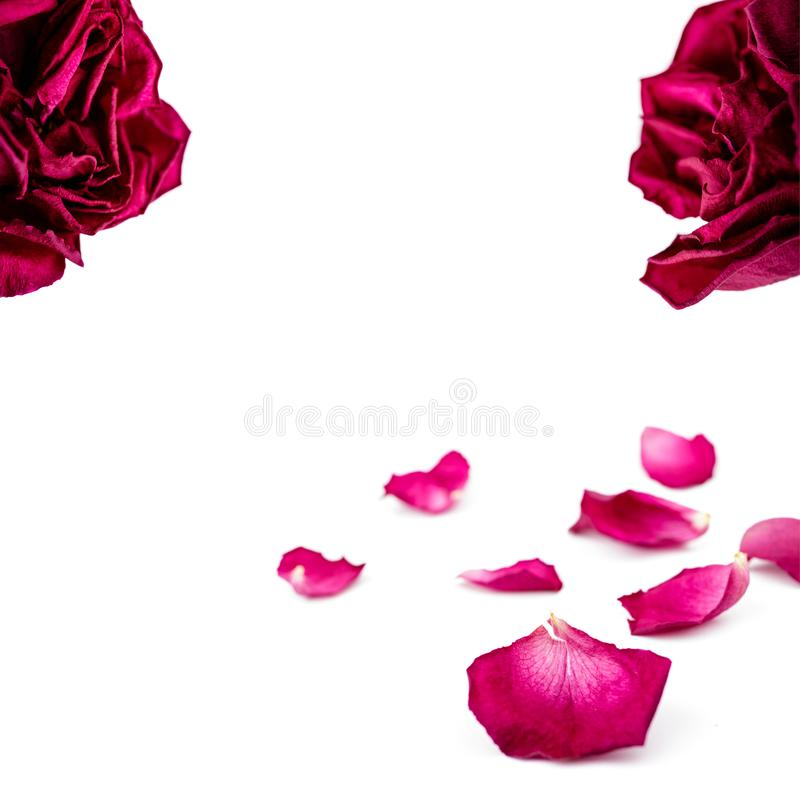 Upps?ttning av r?da roskronblad som isoleras p? vit Makro royaltyfria foton