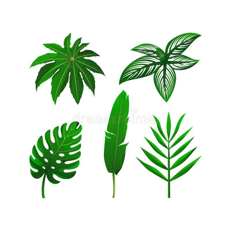 Upps?ttning av tropiska gr?na sidor Vektorillustrationsamling Isolerade best?ndsdelar p? den vita bakgrunden vektor illustrationer