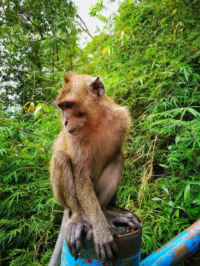 Upptäckt av Thailand, Tiger Cave, Krabi royaltyfria bilder