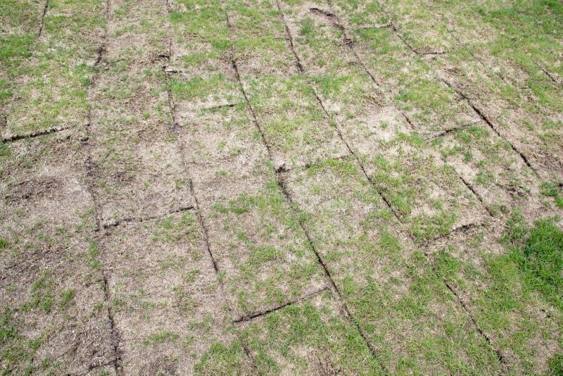 Uppvecklat land rullar med grönt gräs, gräs är mycket dålig kvalitet, royaltyfri foto
