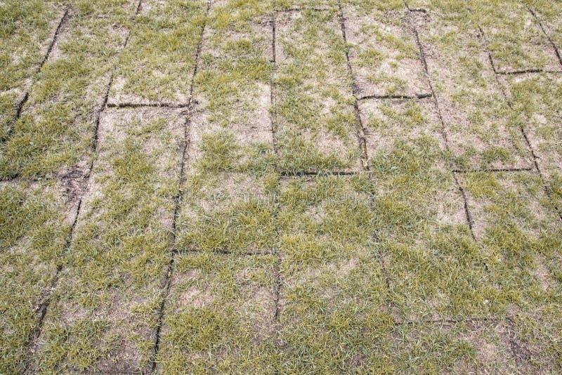 Uppvecklat land rullar med gult höstgräs, gräs är mycket dåligt fotografering för bildbyråer