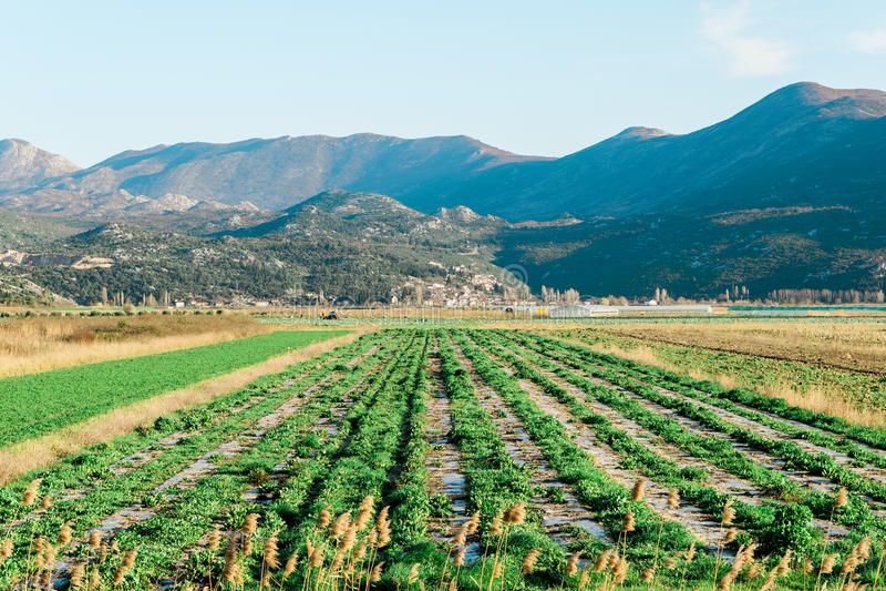 upraw pola zieleń zdjęcia stock