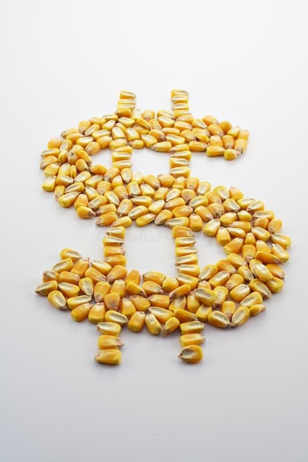 uprawa gotówkowa kukurydzana ii fotografia stock