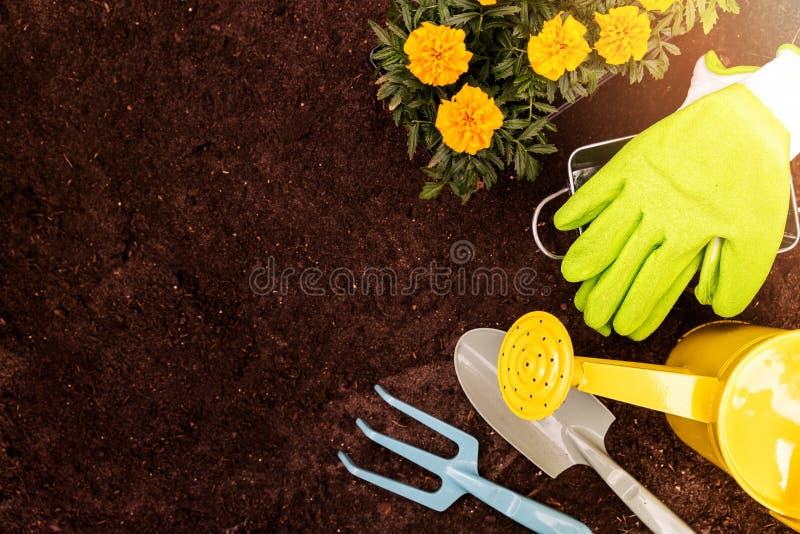 Uprawiać ogródek narzędzia i nagietków kwiaty na glebowym tle z policjantem obraz royalty free
