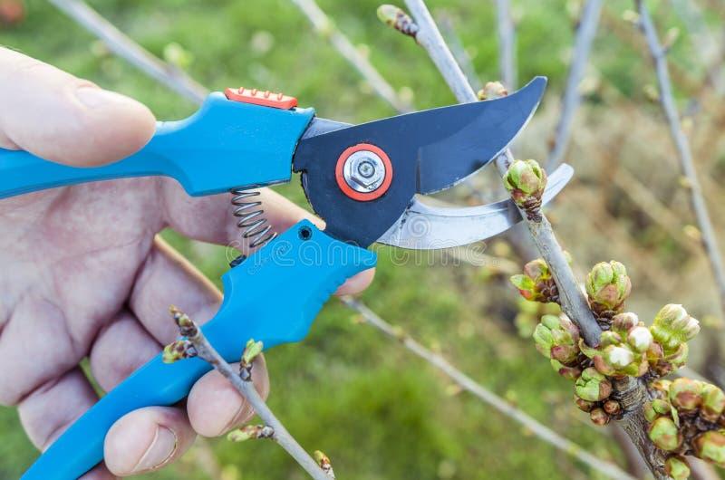 Uprawiać ogródek przycinający narzędzie obraz stock