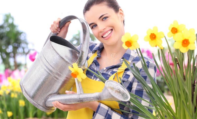 Uprawiać ogródek uśmiechniętej kobiety z podlewanie puszki narcyza flowerbed fotografia royalty free