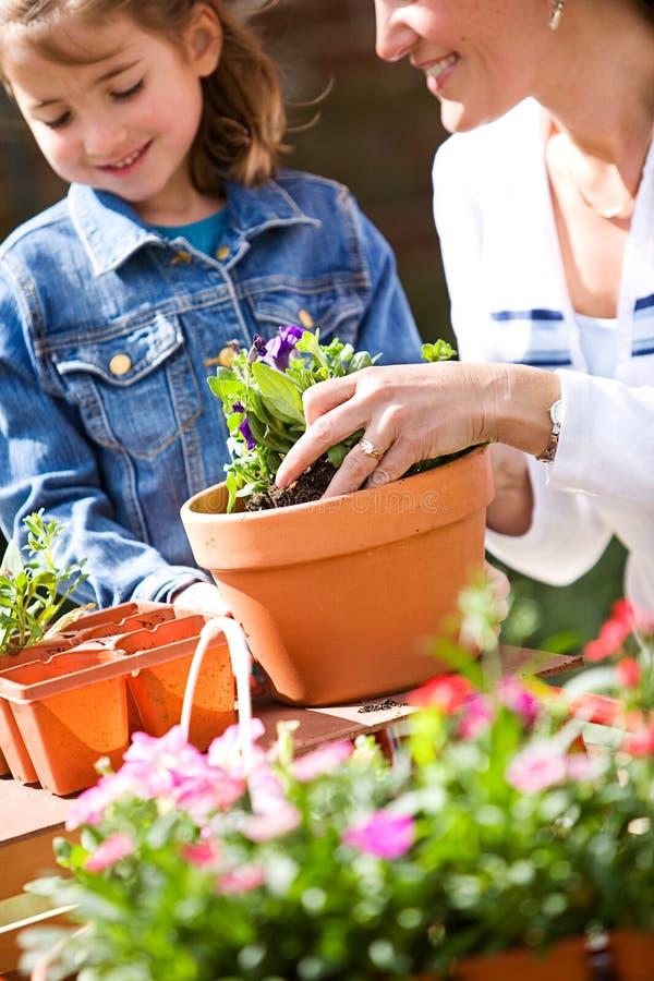Uprawiać ogródek: Uczący się Dlaczego Puszkować kwiaty zdjęcie stock