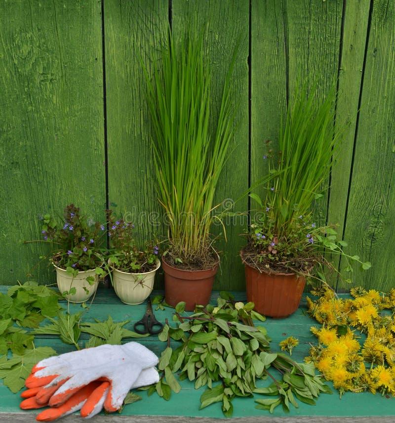 Uprawiać ogródek wciąż życie z roślinami w garnkach i rękawiczkach fotografia royalty free