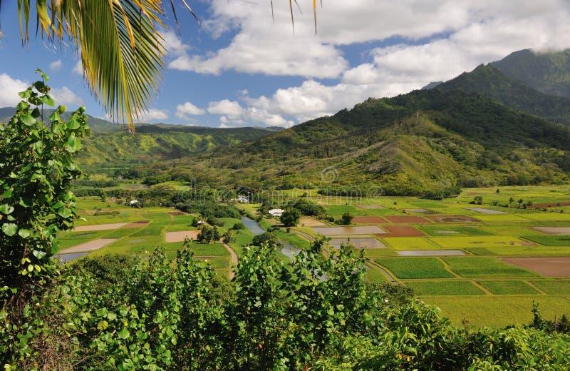 Uprawiać ziemię dolinę na Kauai Hawaje obrazy stock