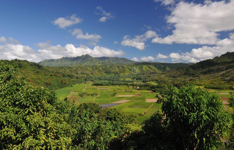 Uprawiać ziemię dolinę na Kauai Hawaje zdjęcie royalty free