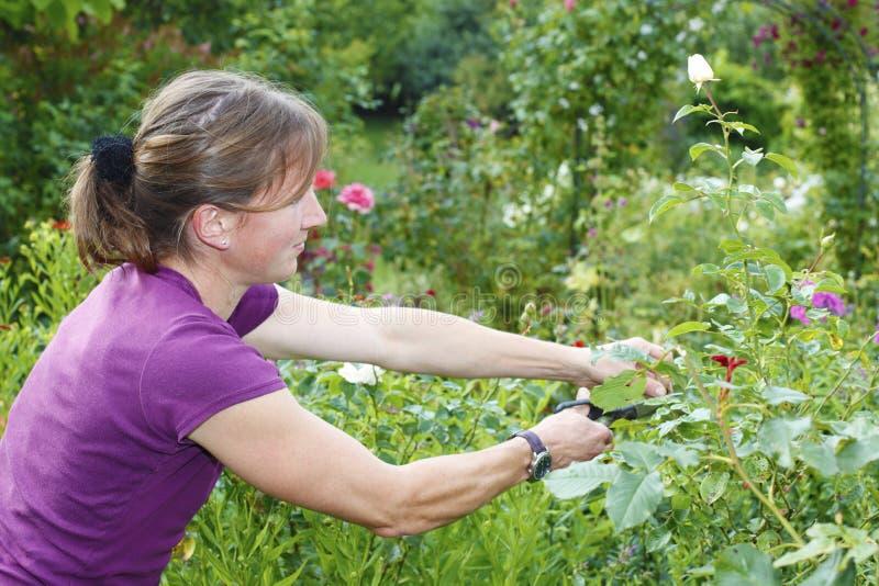 Download Uprawiać ogródek zdjęcie stock. Obraz złożonej z ogrodnictwo - 42525808