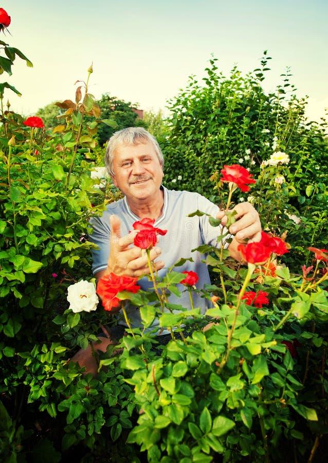 uprawia ogródek mężczyzna zdjęcie stock