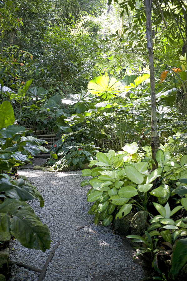 uprawia ogródek pikantność tropikalną obrazy royalty free
