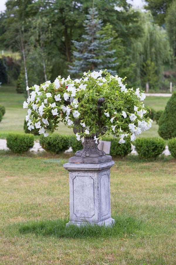 Uprawia ogródek wokoło ruina klasycznego pałac, dekoracyjny kwiatu garnek, Sobkow, Polska obrazy royalty free