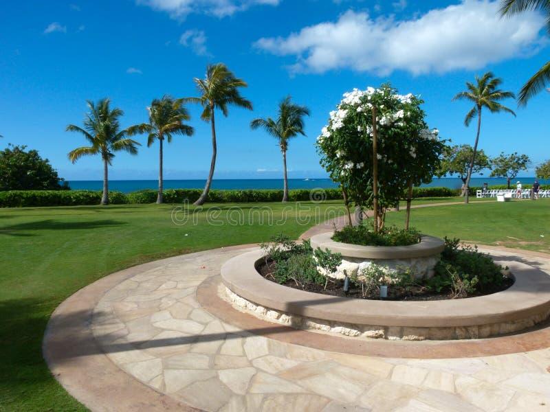 Uprawia ogródek z drzewkami palmowymi przegapia morze w Hawaje zdjęcia stock