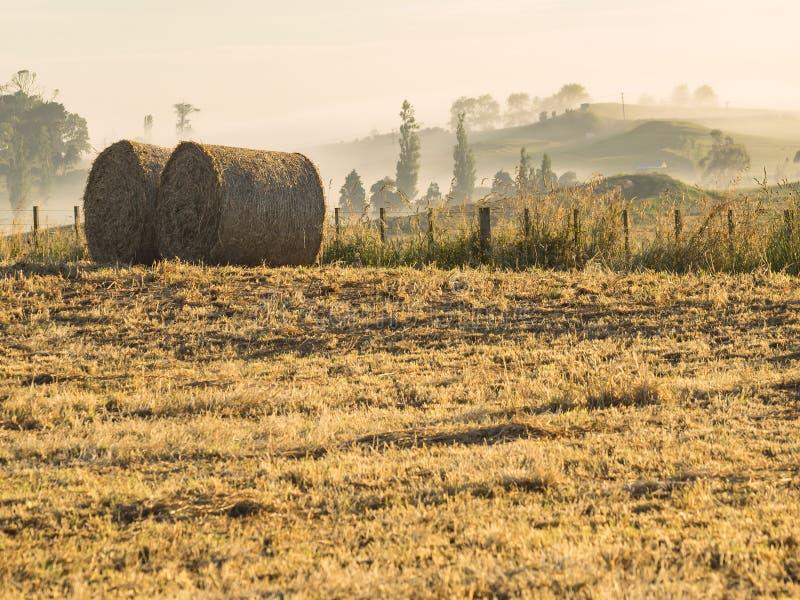 Uprawiający ziemię uprawy siana belę stacza się wcześnie w ranku zdjęcia royalty free