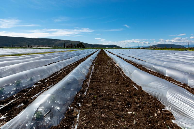 Uprawiający ziemię w Grecja, rzędy małe szklarnie zakrywać z plastikowym filmem z narastającymi melonowymi roślinami w wio fotografia royalty free