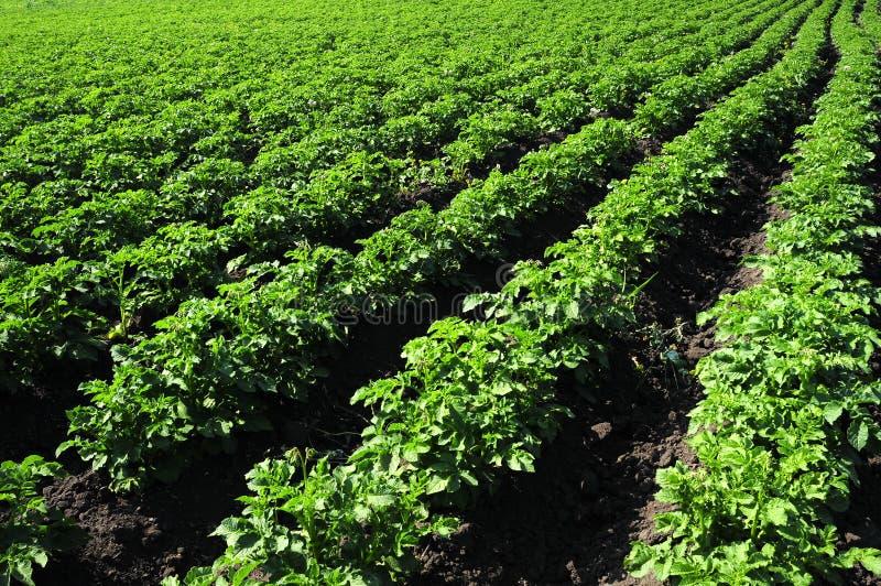 uprawy bruzda fotografia royalty free