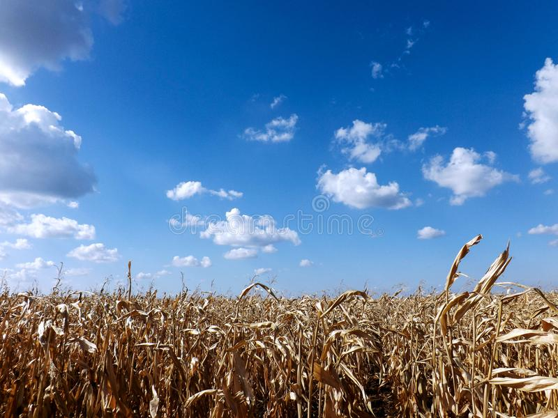 Uprawy na polu z niebieskim niebem i chmurami zdjęcia royalty free