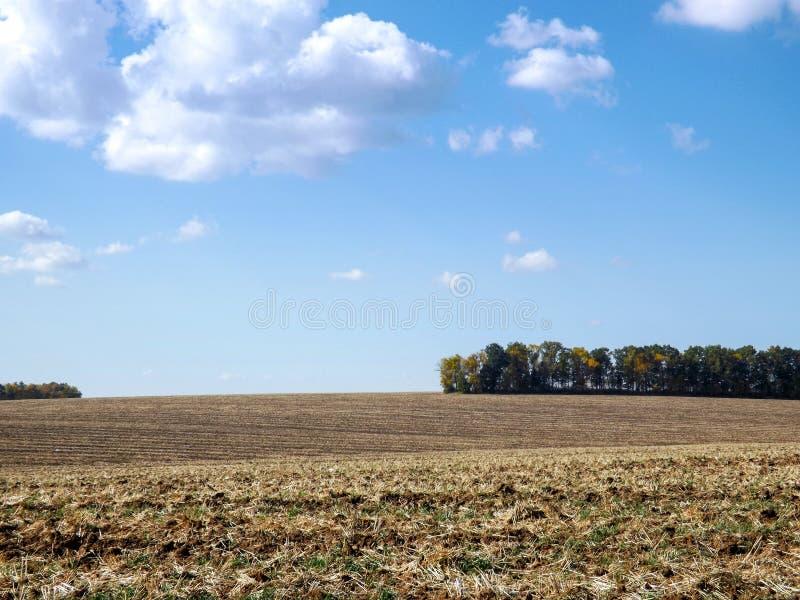 Uprawy na polu z niebieskim niebem i chmurami zdjęcia stock