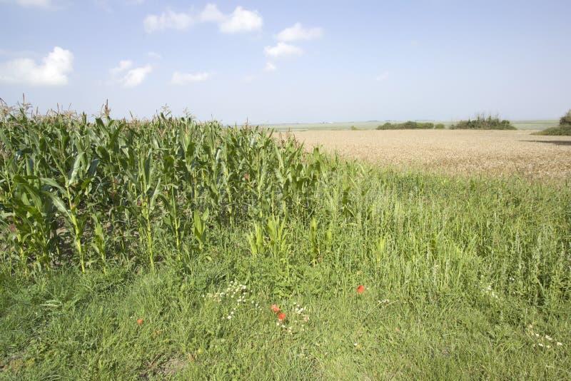 uprawy obszarów wiejskich zdjęcia royalty free