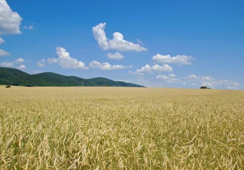 Uprawy pole z Zalesionymi wzgórzami w odległości zdjęcie royalty free