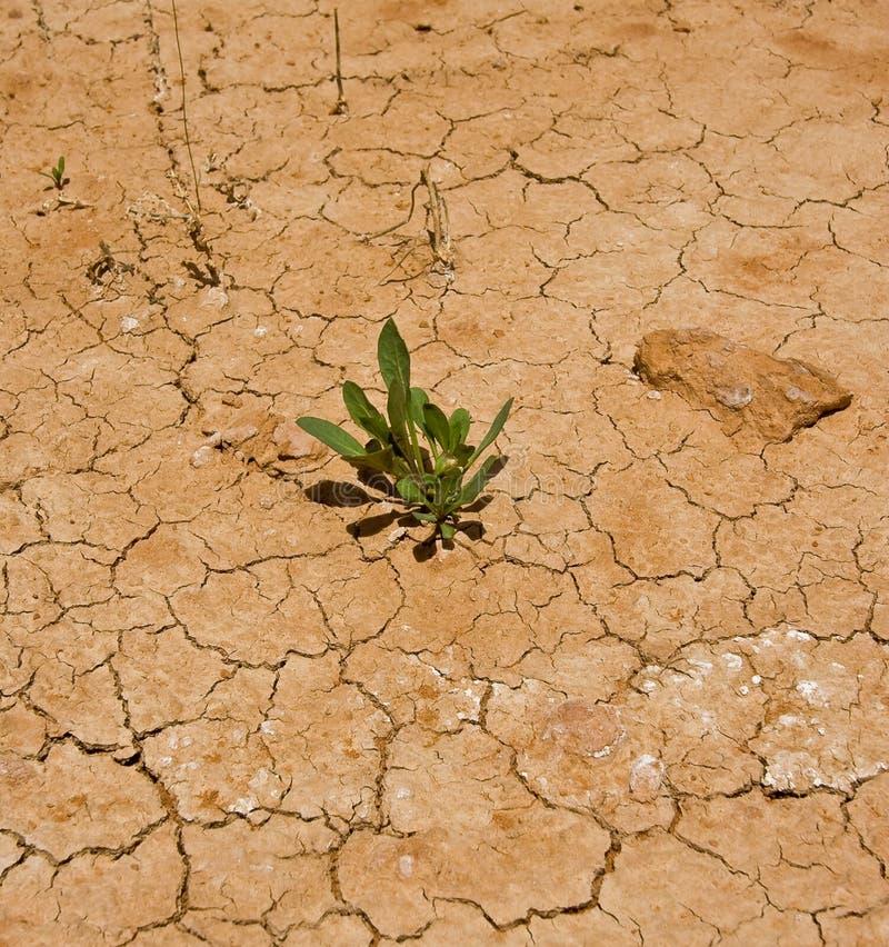 uprawy pustynia obrazy stock