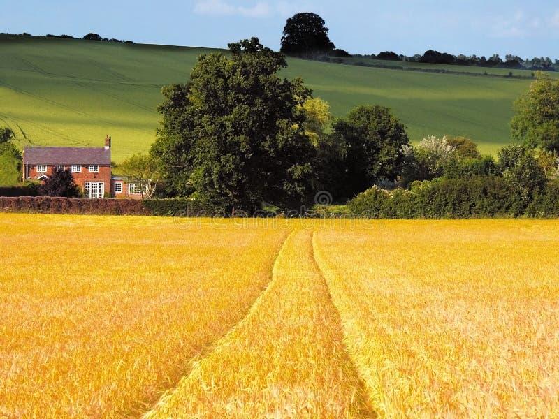 uprawy zbóż pól uprawnych obrazy stock