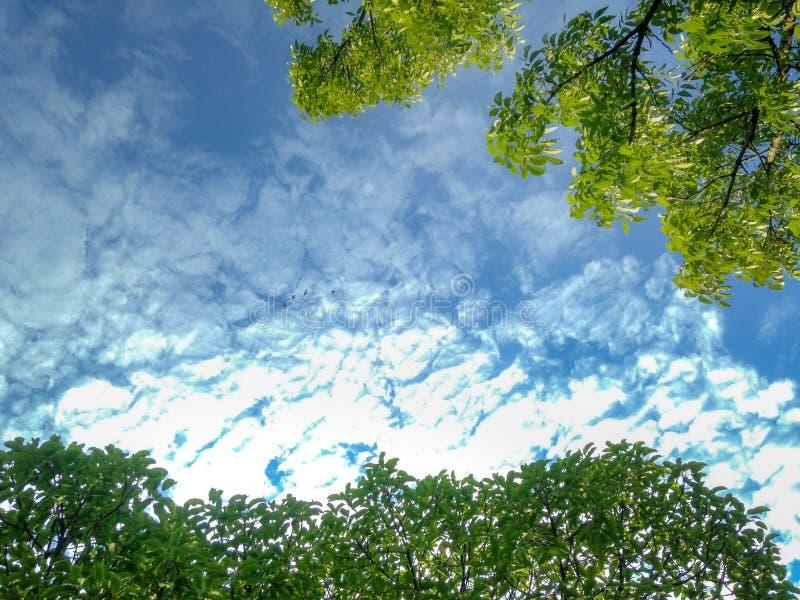 Uprisen kąt utrzymanie zieleni drzewo w ogródzie z chmurnym i niebieskim niebem zdjęcie royalty free