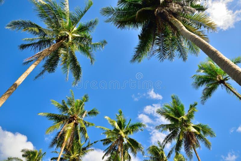 Uprisen-Winkel-Perspektivenansicht der KokosnussPalme stockfotos