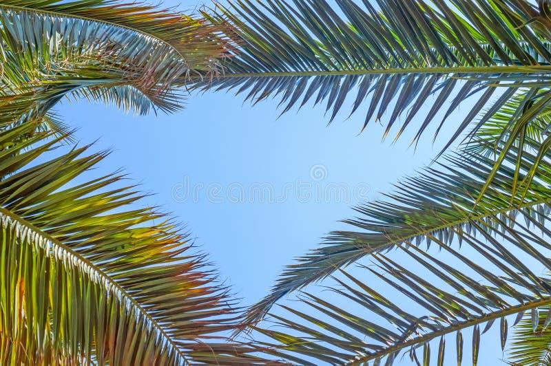 Uprisen-Winkelsicht der Kokosnuss verlässt mit neuer Farbe des Hintergrundes des blauen Himmels des Strandes stockbilder