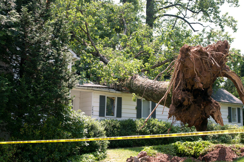 Uprooted tree. Fell on a house after a serious storm came through royalty free stock images