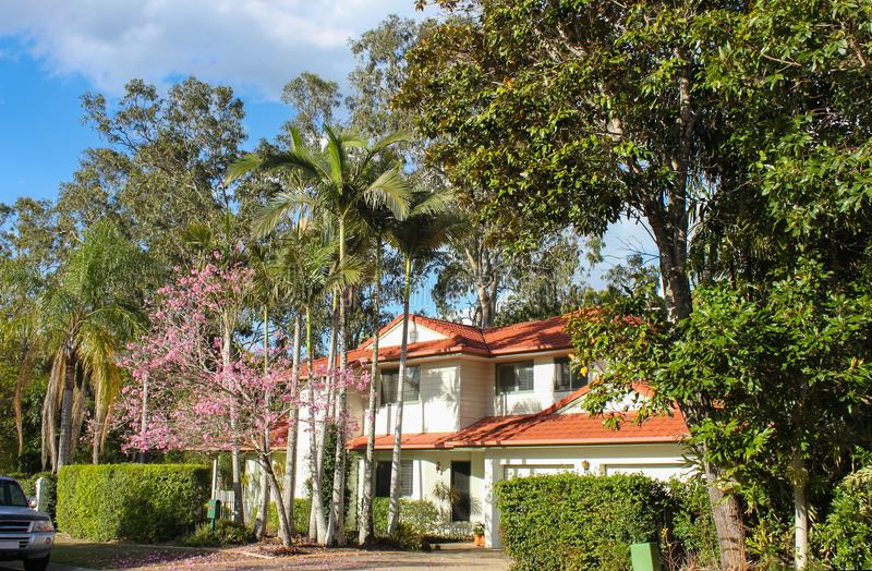 Upscale white Australian house with tile roof and palm trees and pink flowering tree in front - tall gum trees behind stock photography
