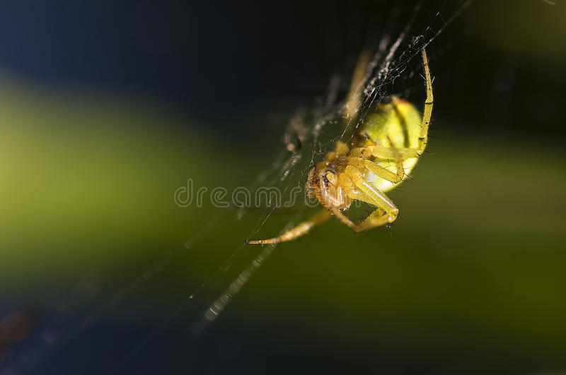 Download Upside down stock image. Image of upside, small, evening - 11028987
