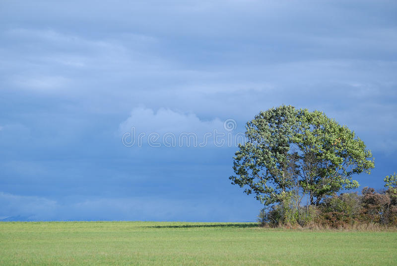 Upstate New York farm land with tree with a blue clouded sky in autumn stock image
