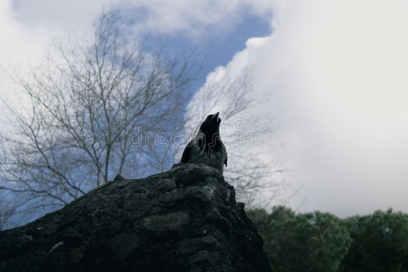 Upview wrony ptasia pozycja w kamieniu zdjęcia stock