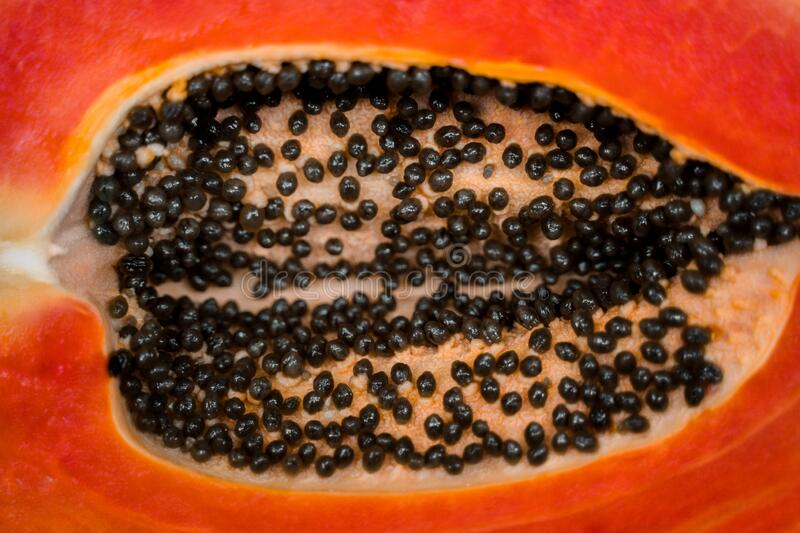 Upward shot of a Papaya cut in half lies on the table. Healthy fruit diet. Black papaya seeds inside an orange juicy fruit. Macrophotography royalty free stock photo