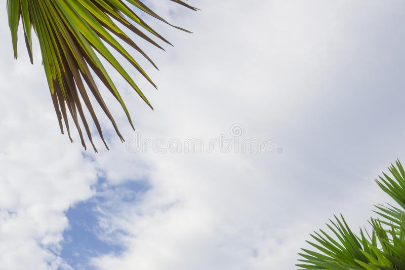 Upward view of soft wave of fluffy white clouds on vivid blue sky, green leafs palm trees on foreground stock photos