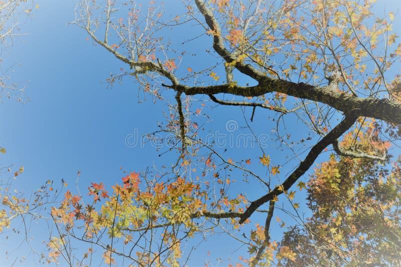 Upwards Tree royalty free stock images