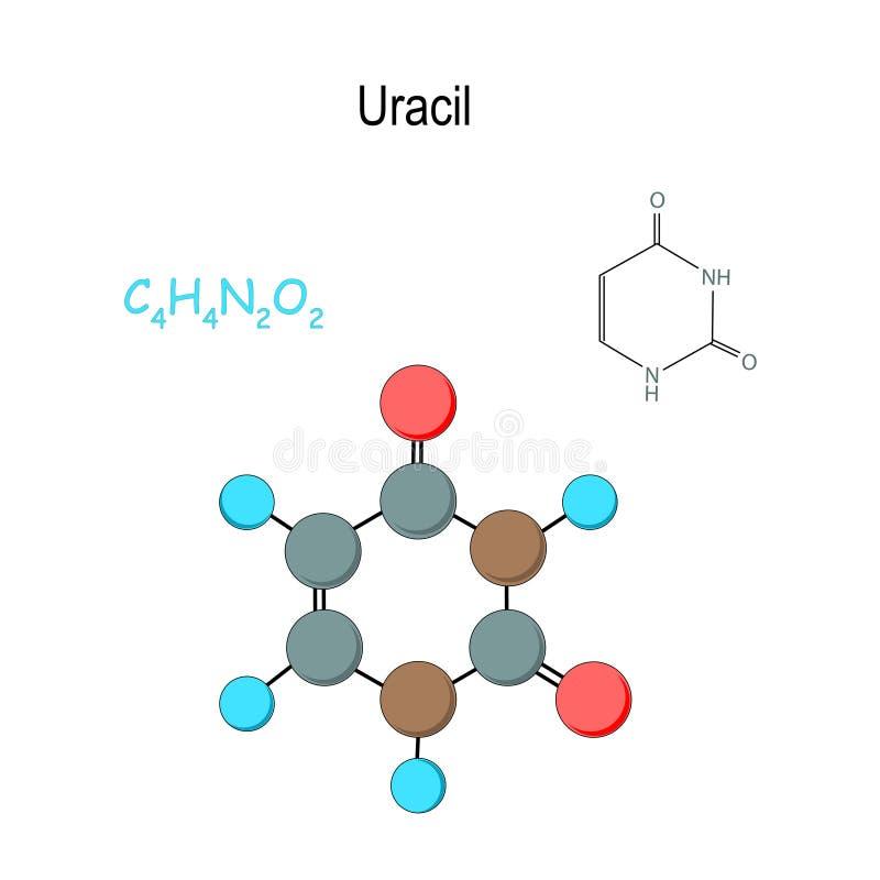uracile Formule structurelle et mod?le chimiques de mol?cule C4H4N2O2 illustration libre de droits