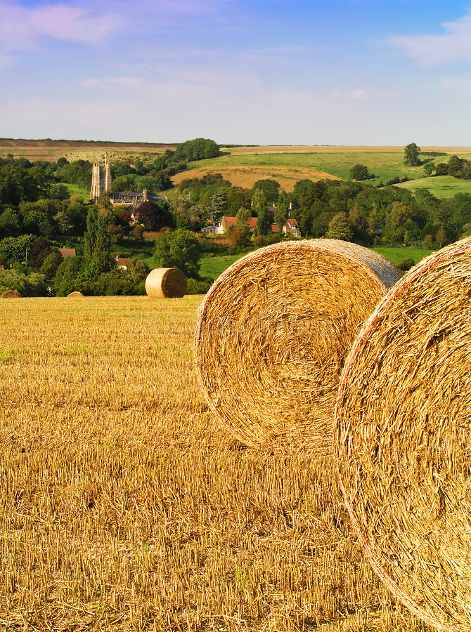Download Uratowaliśmy siano obraz stock. Obraz złożonej z farm, natura - 136301