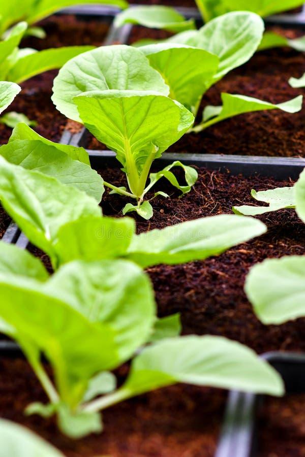 Urban agriculture, urban farming, or urban gardening stock photos