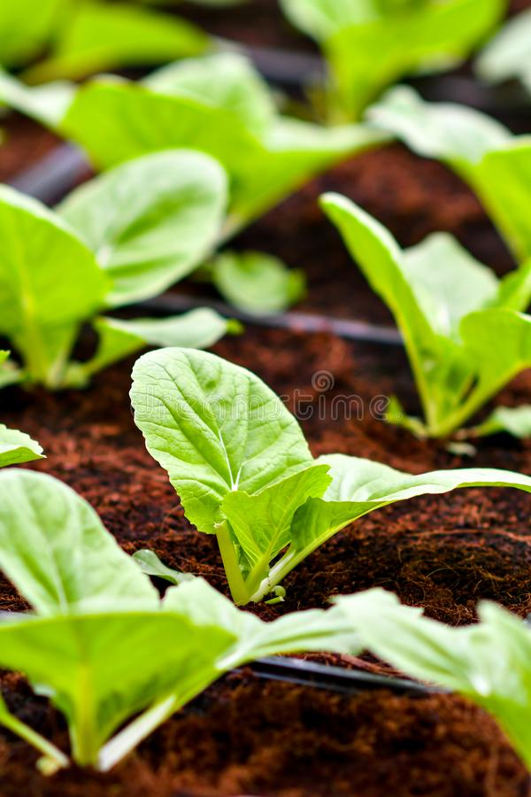 Urban agriculture, urban farming, or urban gardening royalty free stock photos