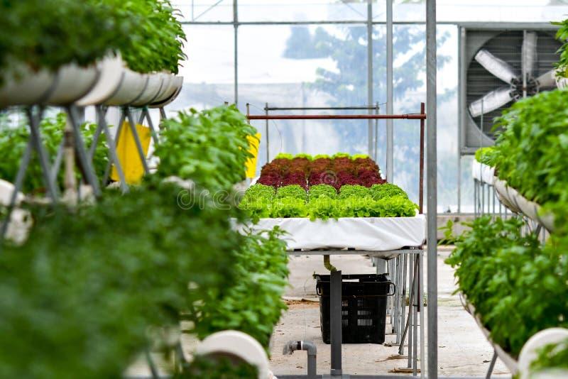 Urban agriculture, urban farming, or urban gardening stock images